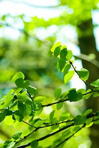 緑イメージ